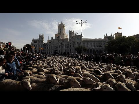 Ισπανία: Παρέλαση από πρόβατα στο κέντρο της Μαδρίτης!