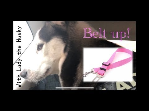 Dog Seat Belt Review - New LAW! Are You Complying? A Review With Lady The Husky