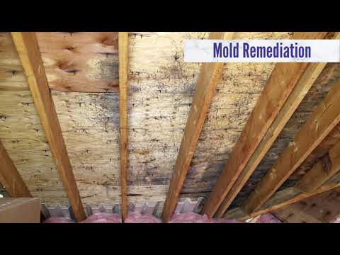 Olympic Restoration Systems Services