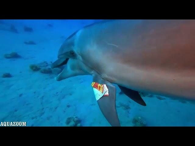 מחר: יום ניקוי החופים והים הגדול בעולם • צפו בדולפין המסכן עם התפוצ'יפס