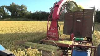 JF FCT 1050 Cutting Wholecrop Silage @ Marlinstown Farm (2015)