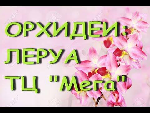 """Леруа:ЗАВОЗ прекрасных ОРХИДЕЙ,тц """"Мега"""",Самара,02.04.21."""