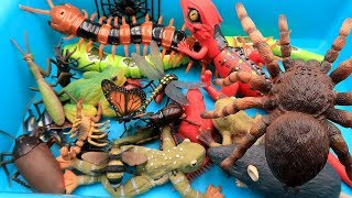 Best Insect Toys For Kids Learn Insect & Bugs Education Video! RC Spider centipede scorpion larva