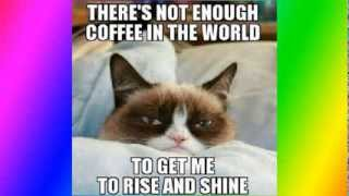 Top 50 funniest and best grumpy cat memes
