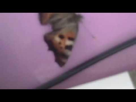Куприн собачье счастье текст