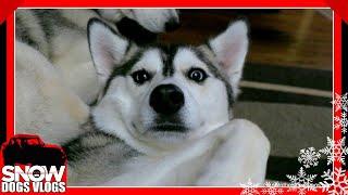 DOG SLEDDING WITH NORA?