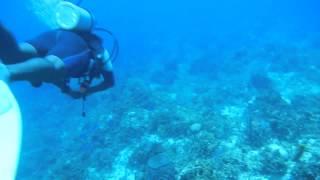 Scuba  -- 0593 Negril, Jamaica 2012