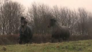 Esses animais ficaram separados por 4 anos, veja o reencontro deles