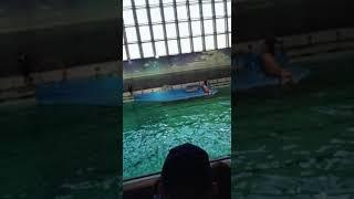 В дельфинариуме