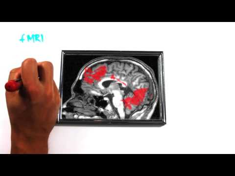 Prostata Enciclopedia Medica