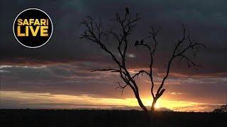 safariLIVE - Sunset Safari - April 23, 2019- Part 2