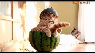 Няшные животные радуют Funny People