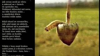 Video SKLAD by WALDA - O houbičkách a tak..