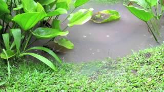 Смотреть онлайн Рыба ходит по траве, вот доказательство