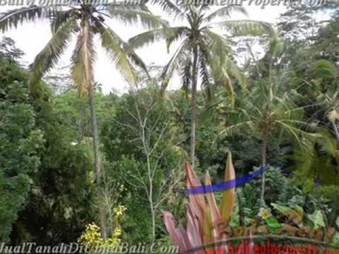 2.600 m2 Lahan  view sawah sungai dan tebing di Ubud TJUB421
