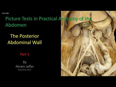 Test obrazkowy z anatomii brzucha - ściana tylna (część 1)