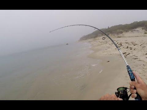 Tun (Albacore) fanges direkte fra stranden