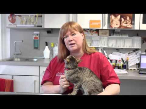 MeinAgora und Beaphar - Zecken und Flöhe bei der Katze