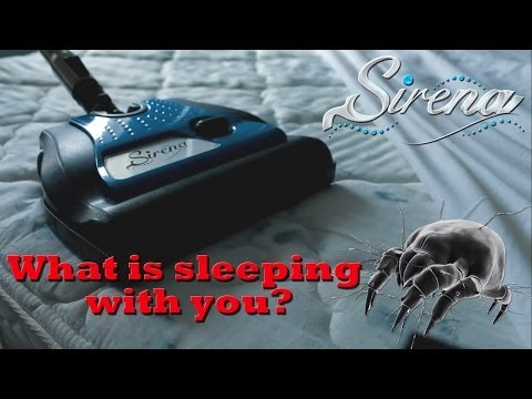 How to get rid of dust mites and allergy problems - Sirena tips