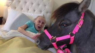 Mobile Minis are rescued mini horses that provide pet therapy to the Valley