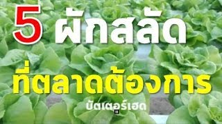 5 ผักสลัดที่ตลาดต้องการ (5 Popular Lettuce Varieties) | Farm Station