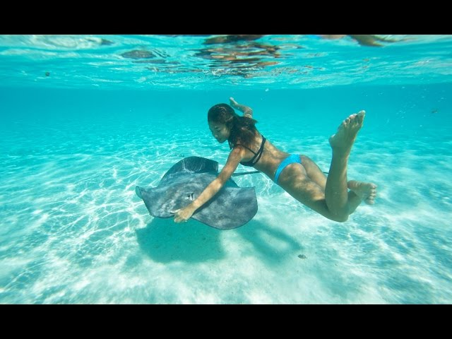 KALOEA Surfer Girls - Moorea, Stringrays & Sharks