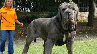 10 Most Powerful Guard Dogs
