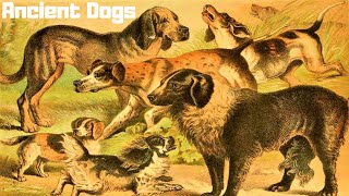 10 Most Ancient Dog Breeds On Earth (P#3)