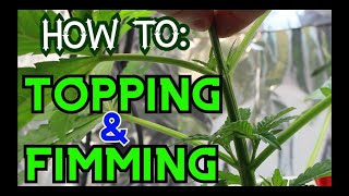 How to : Top and FIM your Marijuana Plant