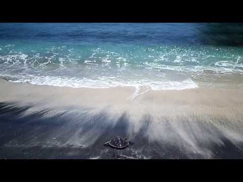 Bali Turtle Conservation Video