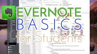 How To Use Evernote | Basics For Students