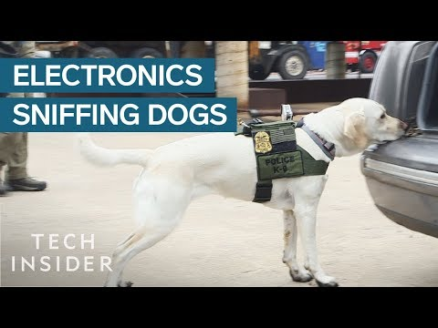 Training Dogs to Sniff for Electronics