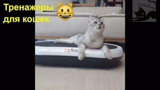 Тренажерка для кота! Беговое колесо. Смешное видео про кошек / Cat training