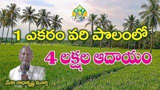 ఒక ఎకరా వరి పొలం లో  నాలుగు లక్షలు||  How to Earn 4 Lakhs in 1 Acre paddy field