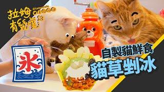 Cat grass shaved ice! Summer homemade cat food|LAMUNCATS ☁
