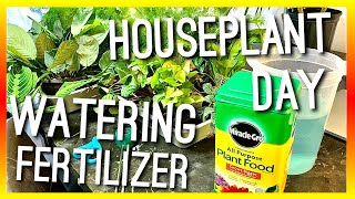 HOUSEPLANT DAY! HOW I WATER MY PLANTS, BOTTOM WATERING, FERTILIZING MY INDOOR PLANTS W/ MIRACLE GROW