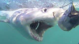 SHARK WEEK! Crazy Shark Videos Caught on Camera | Cage Diving & Diver Attacks 2018