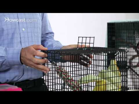 What Not to Do with a Sugar Glider   Sugar Gliders