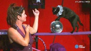 Mulher adota gatos e faz espetáculos com eles