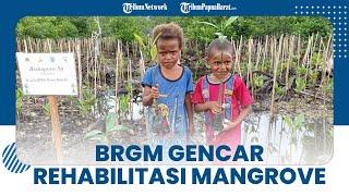 2 Ribu Hektar Kawasan Mangrove Papua Barat Rusak, BRGM Gencar Lakukan Rehabilitasi