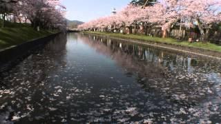 【HD】山形県 鶴岡公園 – がんばれ東北!