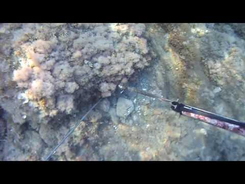 La pesca su una filatura su video di Klyazma