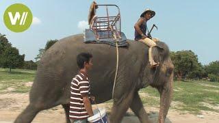 Thailand: Elefantendame und ihre Mahout gehen auf Abenteuer