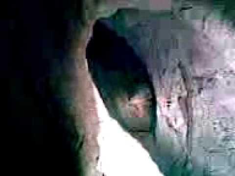 Perros dentro d la cueva  de  san buena