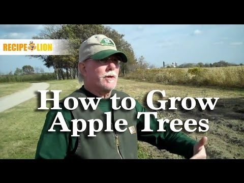 Growing Apples: How to Grow Apple Trees