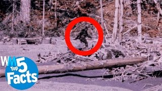 Top 5 Facts About Bigfoot CONFIRMED