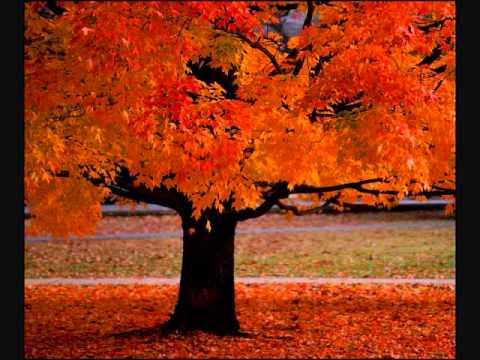 Hamilelikte müzik: Vivaldi - Dört Mevsim