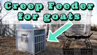 Creep Feeder For Goats | Kiko Goats