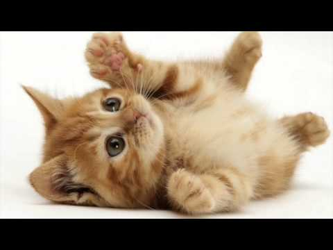 Various Cat sounds Guaranteed to Make Your Cat go Crazy! 2 Hours!