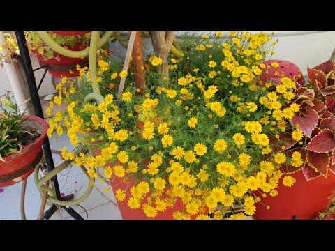 Best Summer Hanging Basket Plants  || Fun Gardening